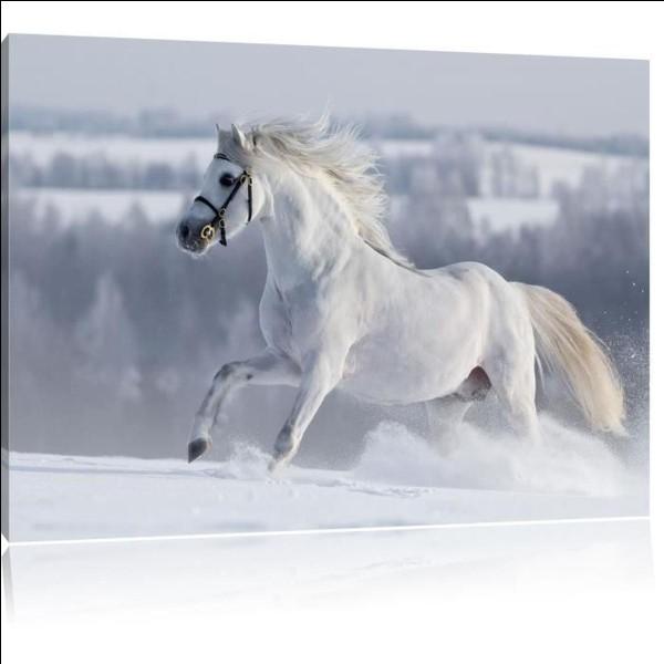 Le cheval peut-il avoir les yeux clairs ?
