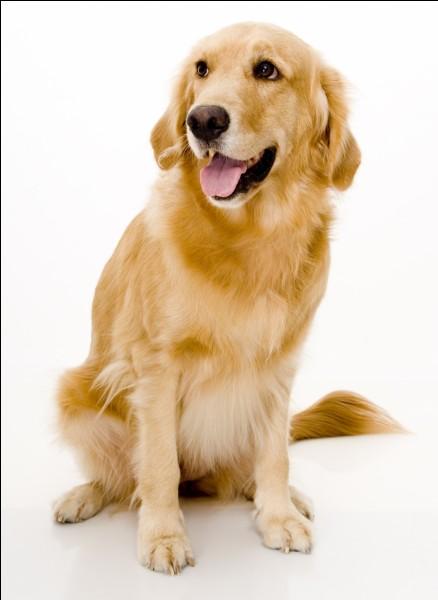 Sa chienne se nomme :