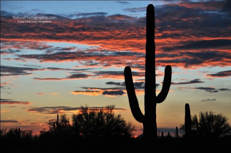 Le photographe dit que dans ce pays, tout ce que nous pouvons imaginer est réel : il est à Santa Fe et a intitulé sa photo ''Haut les mains ''. Quelle est cette région désertique qui a appartenu aux Amérindiens, aux Espagnols, aux Mexicains et aujourd'hui, aux Américains ?
