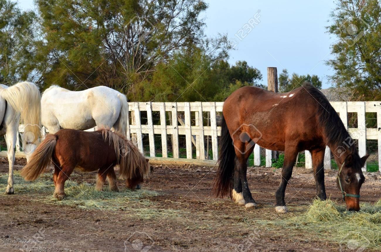 Cheval ou poney ?