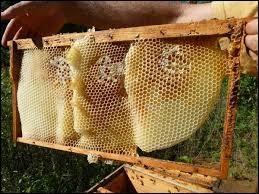 Hormis le miel, quel autre produit peut-on obtenir directement de la ruche ?