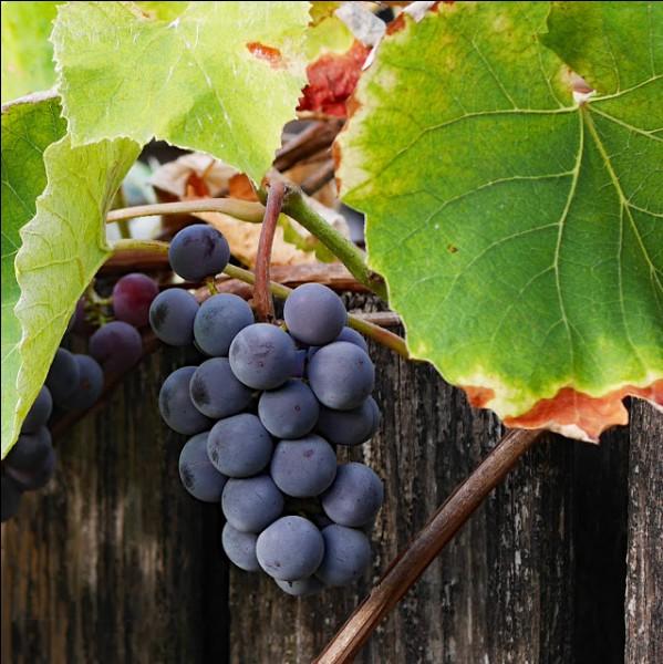 Quelle est la bonne orthographe du village (et de son vin) bourguignon de... ?