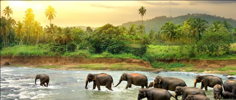 L'une des langues parlées en Inde et au Sri-Lanka !