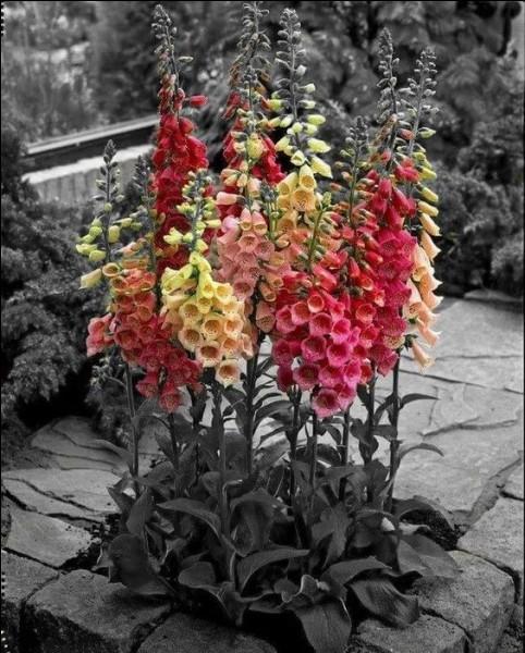 Que sont ces fleurs ?