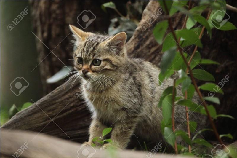 Tu es chaton du clan du Tonnerre, un autre chaton te dit que le clan de l'Ombre est le meilleur. Que fais-tu ?