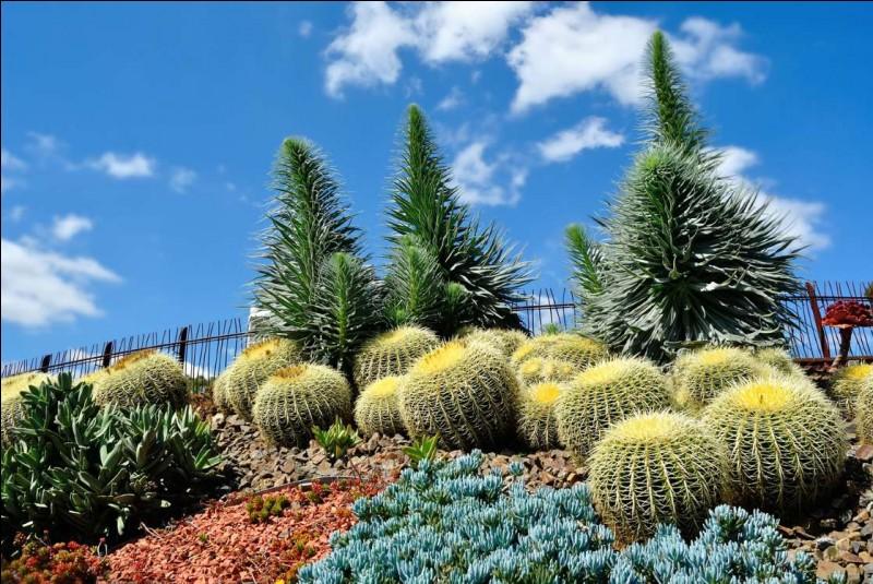 Vous pouvez vous promener sur les 38 hectares de ce parc, qui compte plus de 12 000 espèces de plantes, d'arbres et de végétaux, pour un total de 50 000 végétaux.Trouvez le nom de ce parc qui vous offre le Guilfoyle's Volcano, un réservoir d'eau, le Tropical Glasshouse, qui expose des espèces tropicales, l'Observatoire de la ville et le National Herbarium of Victoria :