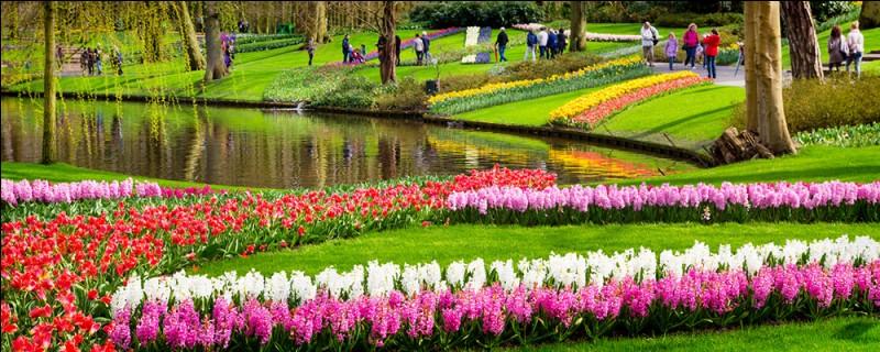 Les architectes paysagistes Zocher et fils ont élaboré, en 1857, un projet de jardin autour du château. La première exposition de bulbes s'est déroulée en 1949 et l'ouverture du parc au public en 1950 permettant d'admirer la floraison de plus de 7 millions de tulipes réparties en 800 espèces.Situez ce jardin qu'on qualifie de plus beau parc printanier au monde :