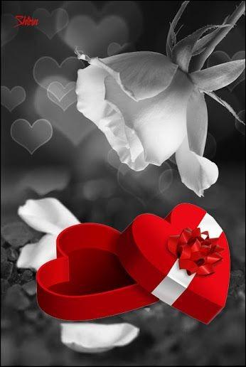 """Qui chantait """"Les mains pleines d'amour, j'offrirai au bonheur, et les jours et les nuits, et la vie, de mon cœur, et pourtant, pourtant, je n'aime que toi, et pourtant..."""""""