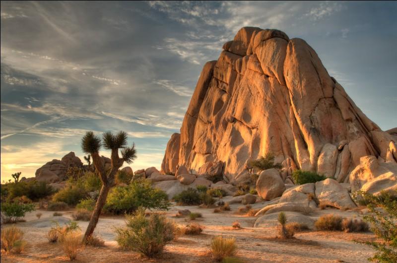 Dans quel État des États-Unis trouve-t-on le parc national de Joshua Tree ?