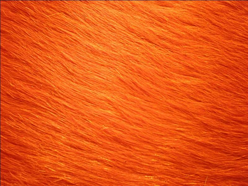Je suis toujours en orange :