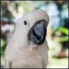 _____ ! J'_____ un perroquet blanc !