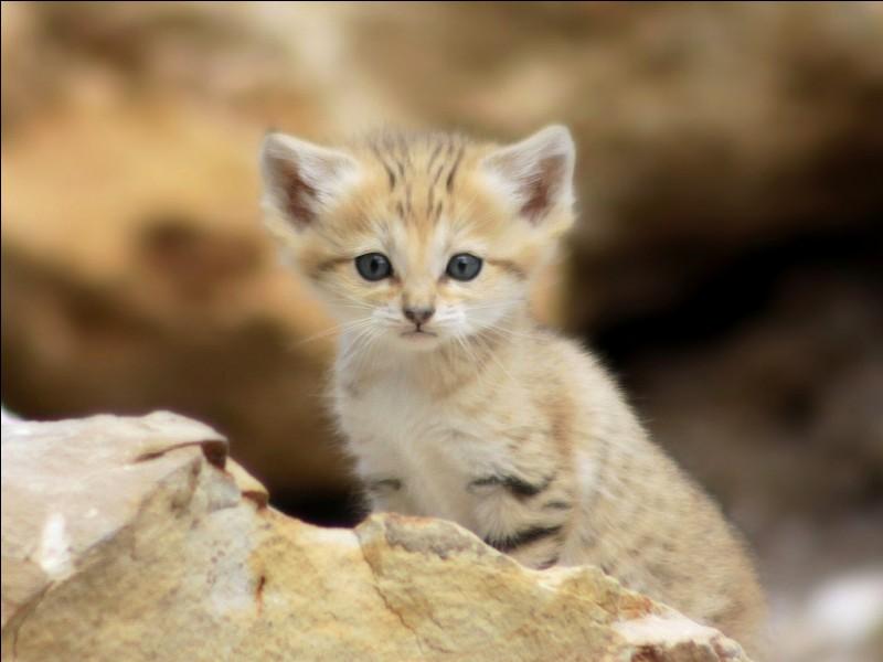J'aime les animaux. En particulier, les ____ des sables.