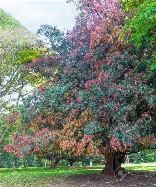 J'_____ les arbres. Nous leur devons la ____.