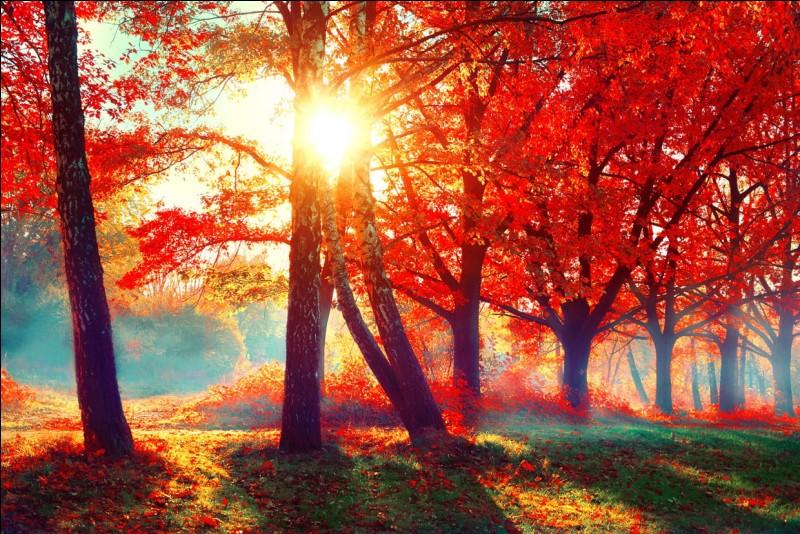 L'automne est ma saison ______.