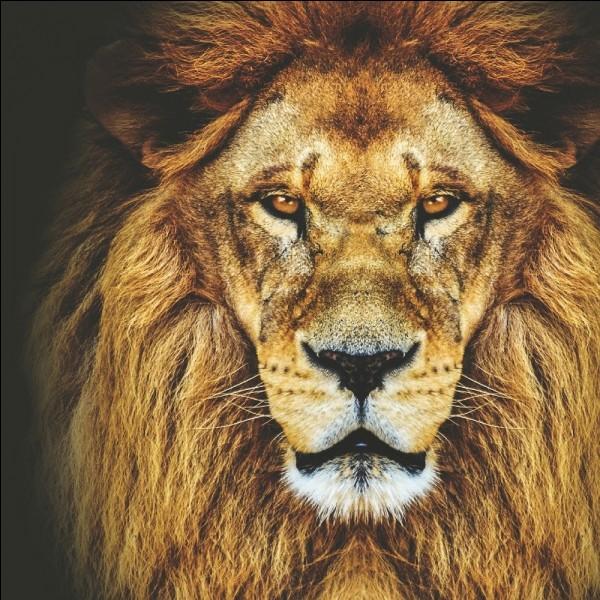 Dans une fable de La Fontaine est cité un Lion. Celui-ci est piégé dans un filet. Par quel animal se fait-il aider ?