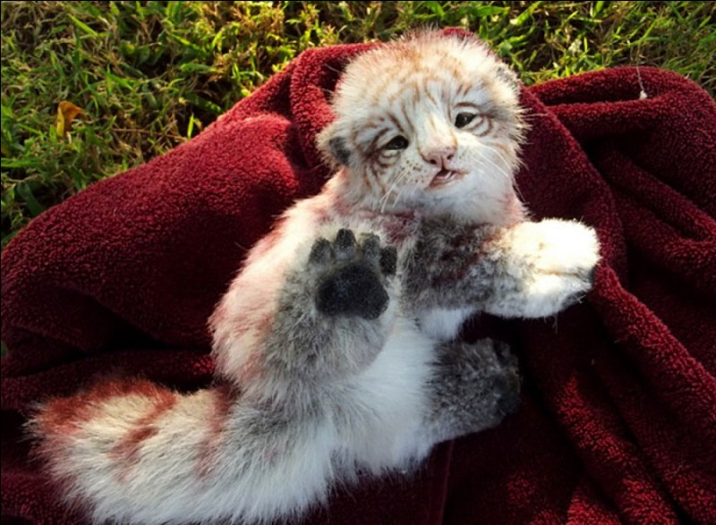 Mignon ce petit chat hein ?