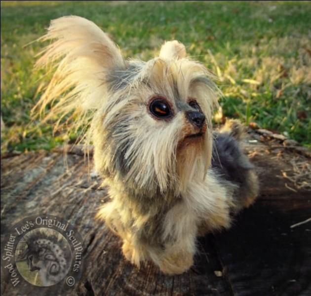 Qu'est-ce qu'il est mignon ce petit chien !