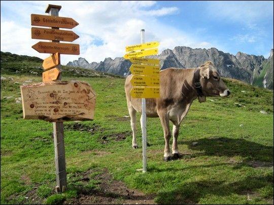 On y retrouve 24 000 km de sentiers balisés de randonnée. Son point culminant est le Grossglockner qu'on voit sur la photo thème. On peut aussi attaquer l'Adlerweg, « la Voie de l'aigle » qui fait 413km. Moi j'ai adoré la ville de Mayrhofen avec ses 200 km de pistes de randonnées et ses 76 km pour le ski. Quel est cet endroit où l'on est accueilli dans des charmants refuges et chalets ?