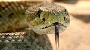 Quel serpent venimeux es-tu ?