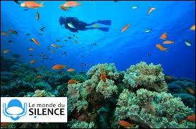 """Qui a réalisé le documentaire """"Le Monde du silence"""" ?"""