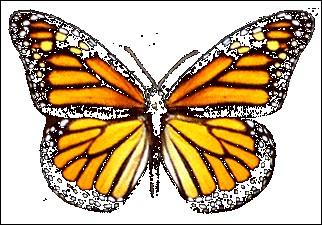 Que représente le papillon ?