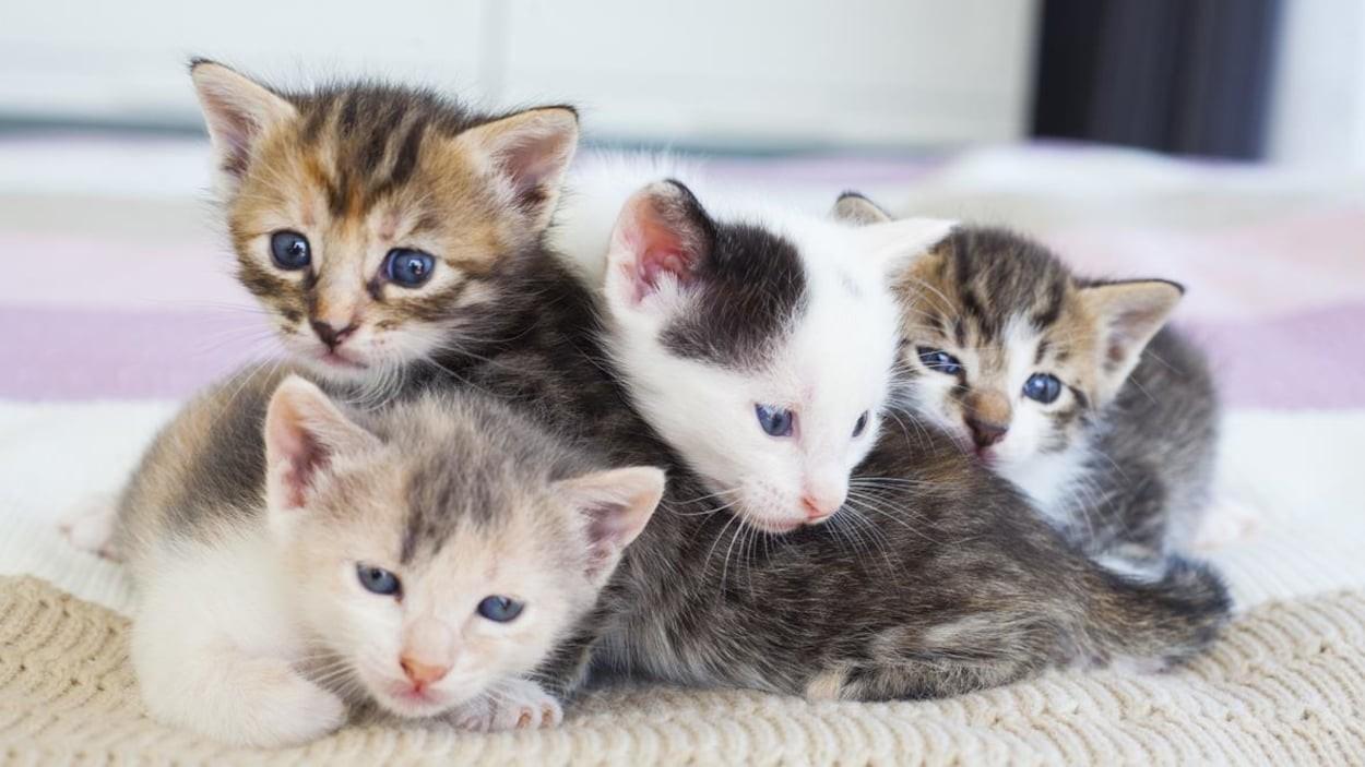 Quel chat es-tu ?