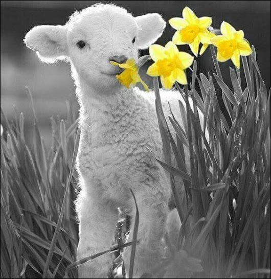 """Dans la fable """"Le Loup et l'Agneau"""" quel était le breuvage de l'agneau ?"""