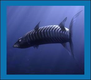 Le Barracuda est le premier méchant du film :