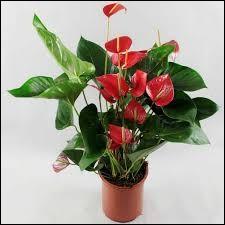 Quel est le nom de cette plante ?