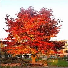 Pouvez-vous me donner le nom de cet arbre ?