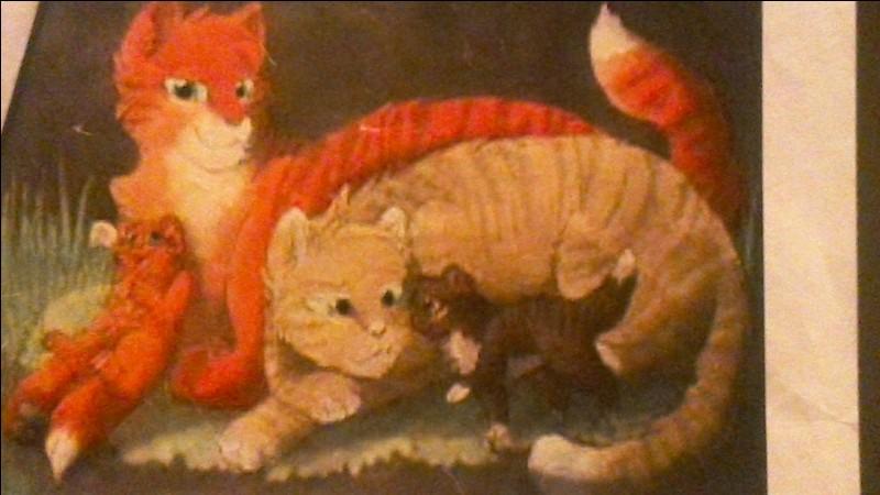 Si tu étais un chaton, ton pelage serait...