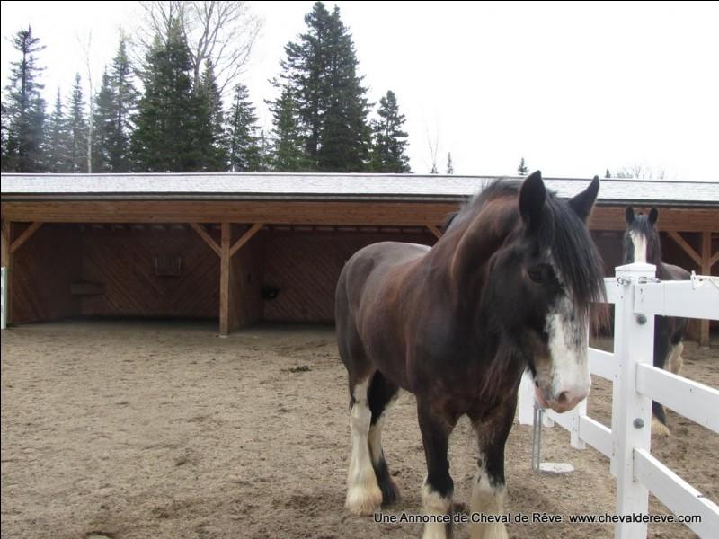 Observez ce cheval. Qu'a-t-il sur les jambes ?
