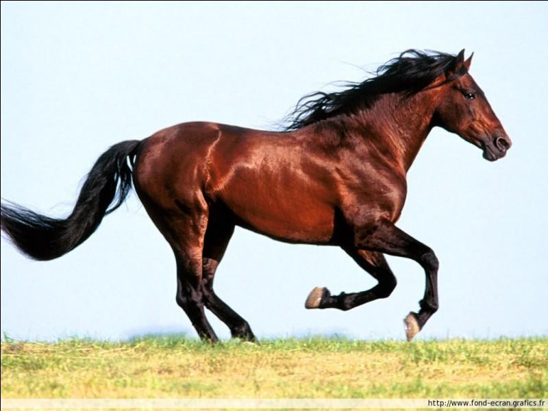 Observez ce cheval. Que fait-il ?