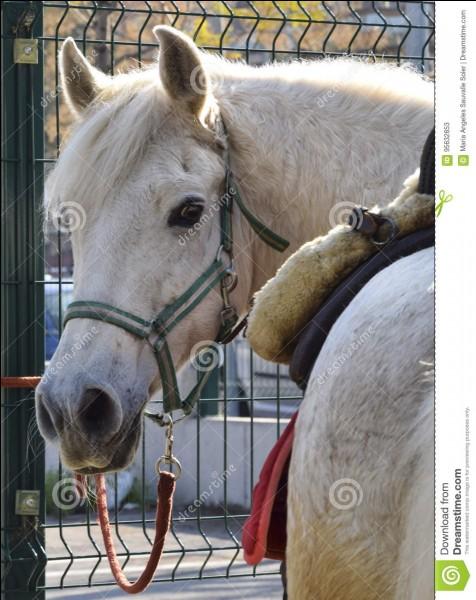 Observez ce cheval. Comment est-il ?