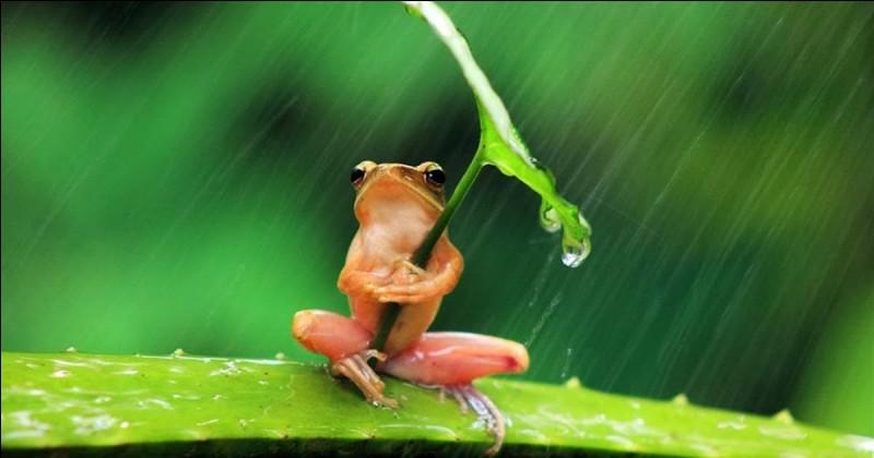 Quel acteur, gaffeur et un peu rêveur tient le rôle principal dans le film ''Le Coup du parapluie'' réalisé par Gérard Oury ?