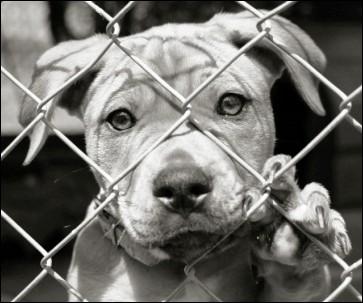 Dernière question pour vous départager. Savez vous à combien s'élève le nombre d'abandons d'animaux en France ?