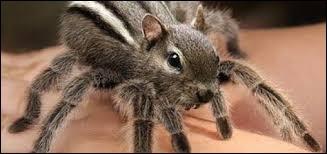 Cet animal existe-t-il vraiment ?