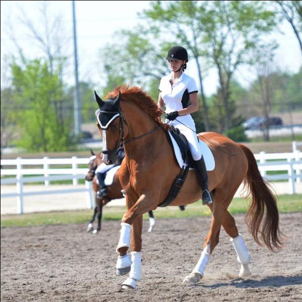 Comment appelle-t-on les personnes qui montent à cheval ?