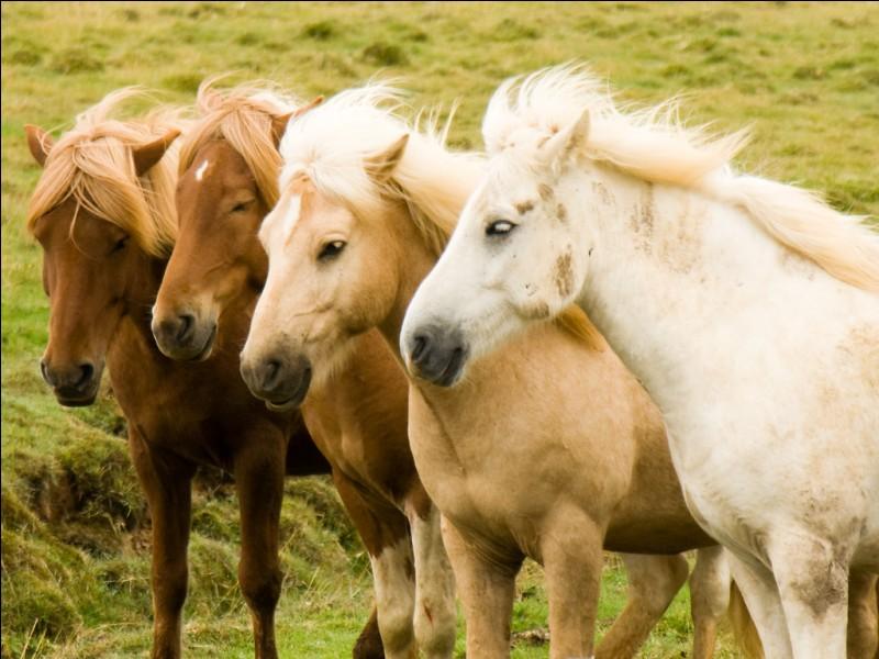 Comment appelle-t-on l'endroit où les chevaux et les personnes font des courses ?