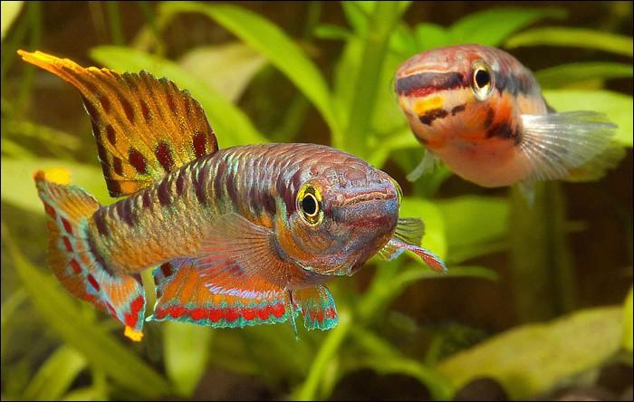 Après le repas, promenade au bord de la rivière pour admirer ces poissons. Ils ont de si belles [na...oires] colorées !