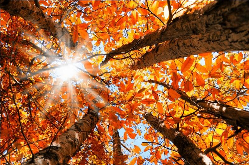 """Quelle saison de l'année est """"Autumn"""" ?"""