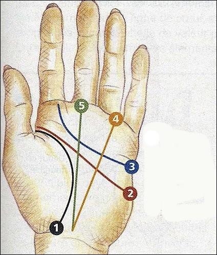 Parmi les lignes de la main, quelle est la ligne n° 2 ?