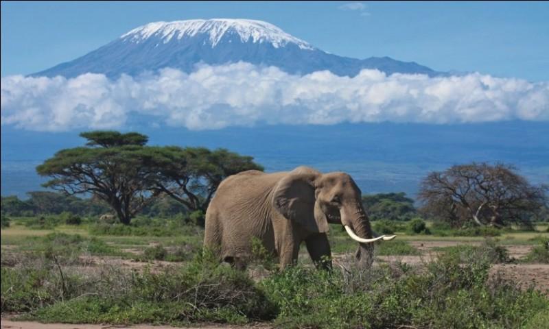 """Qui a écrit le livre """"Les Neiges du Kilimandjaro"""" ?"""
