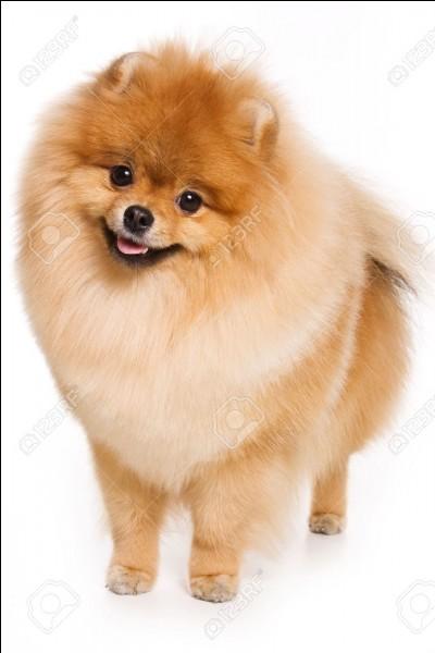 Comment s'appelle le chien de Jennie ?