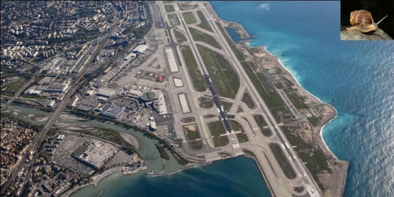 Animaux, aviation !Il y a quelques années, l'aéroport de Nice a été fermé aux avions suite à l'invasion d'un animal ! Bien sûr, il a été rouvert lorsque le problème a été réglé !Que s'est-il passé ?