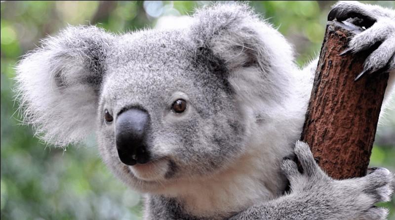 Comment se nomme cet animal ?