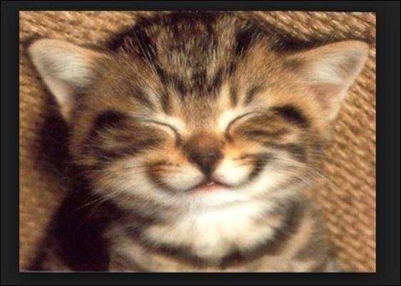 """Qui a dit """"Dieu a inventé le chat pour que l'homme ait un tigre à caresser chez lui"""" ?"""