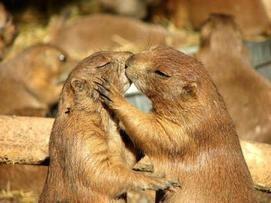 Les marmottes vous donnent la solution