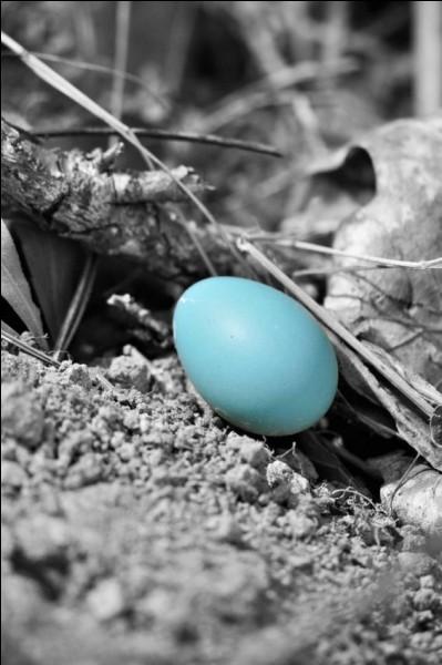 Lequel de ces oiseaux pond des œufs de couleur bleu turquoise ?