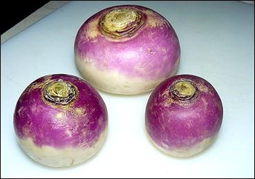 Nous allons déguster un potage freneuse, il aura donc le goût du...